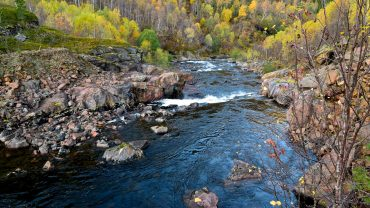 River in the autumn forest in Fauske