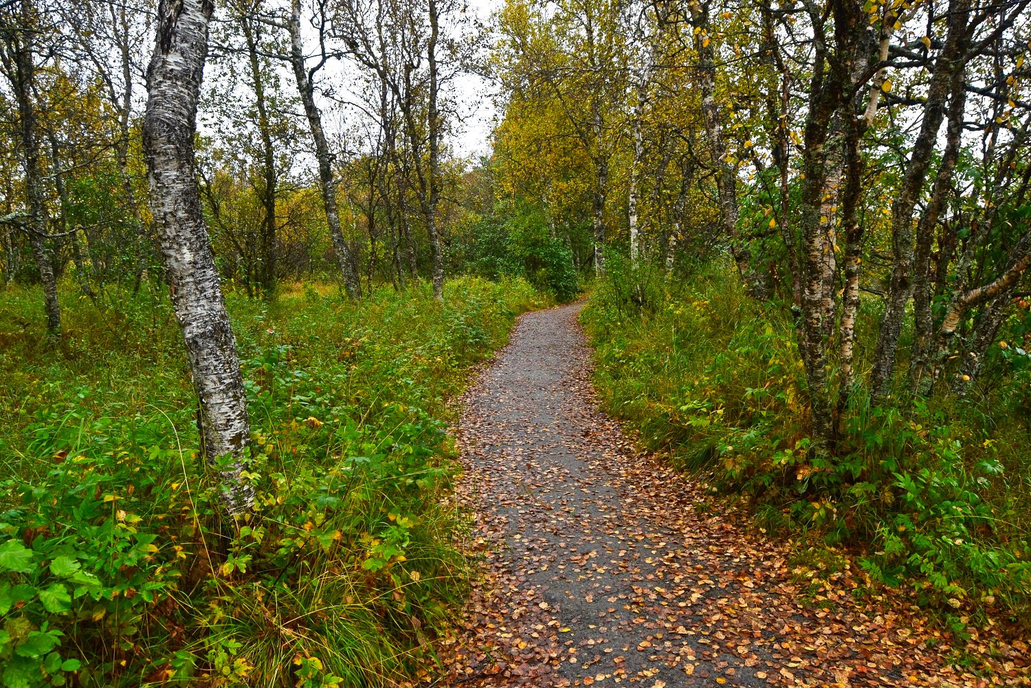 Autumn hike along Futelva in Bodø