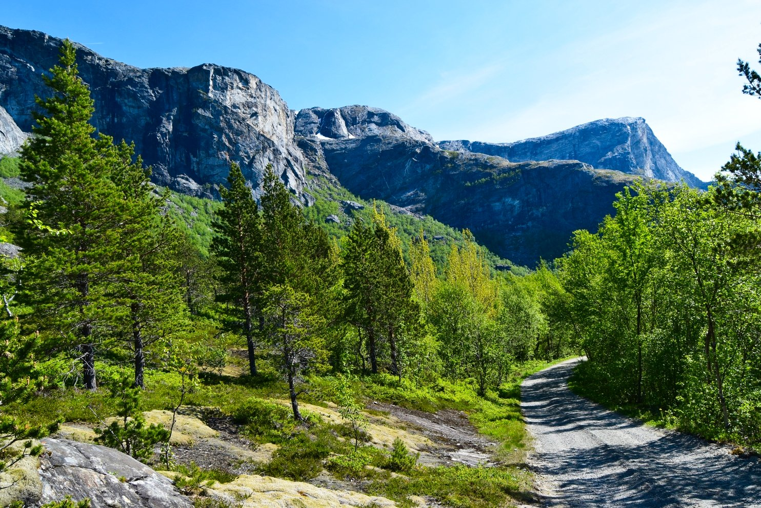 Forest road to Børvatnet lake in Bodø