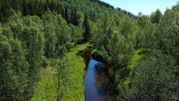 Summer landscape with forest nature sounds